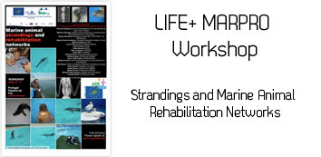 Workshop MarPro: Stranding and Marine Animal Rehabilitation Networks