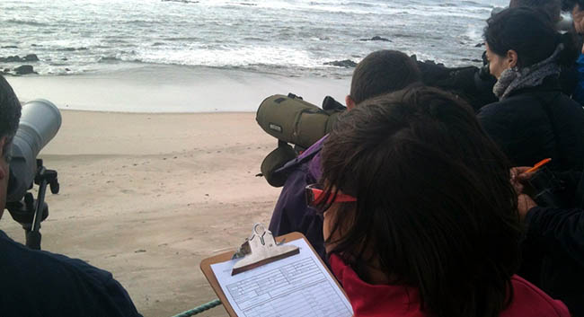 "Course "" Techniques for censuses coastal birds and marine mammals"""