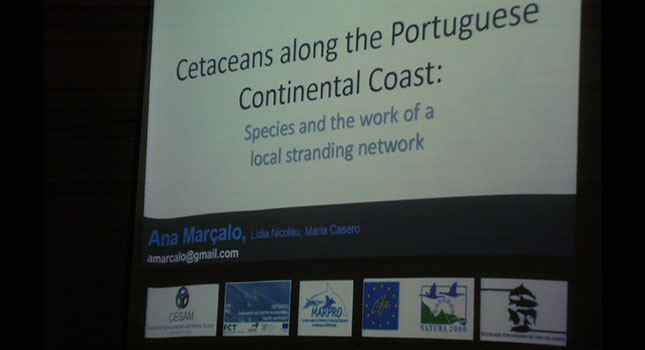 Cetaceans along the Portuguese continental coast