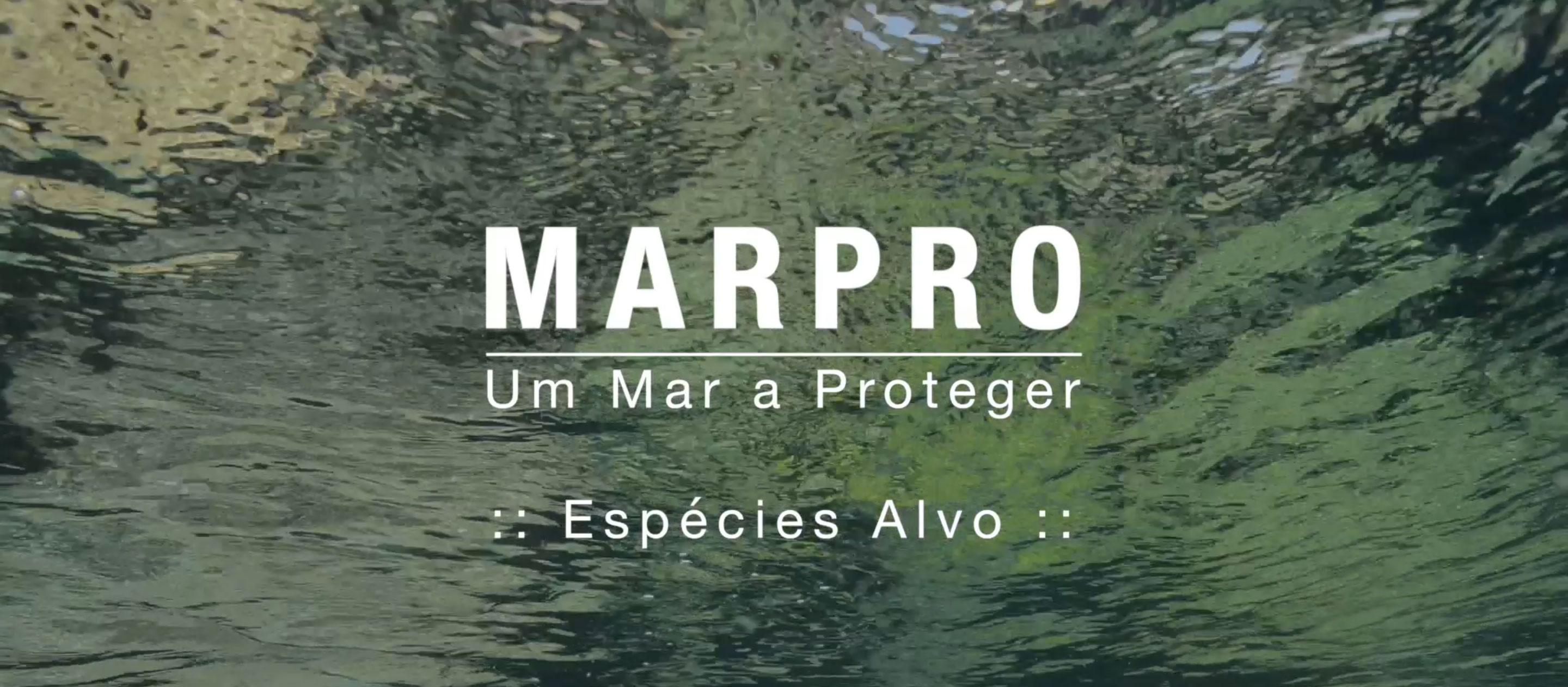 LIFE+ MarPro Documentary - Teaser 1: Target Species