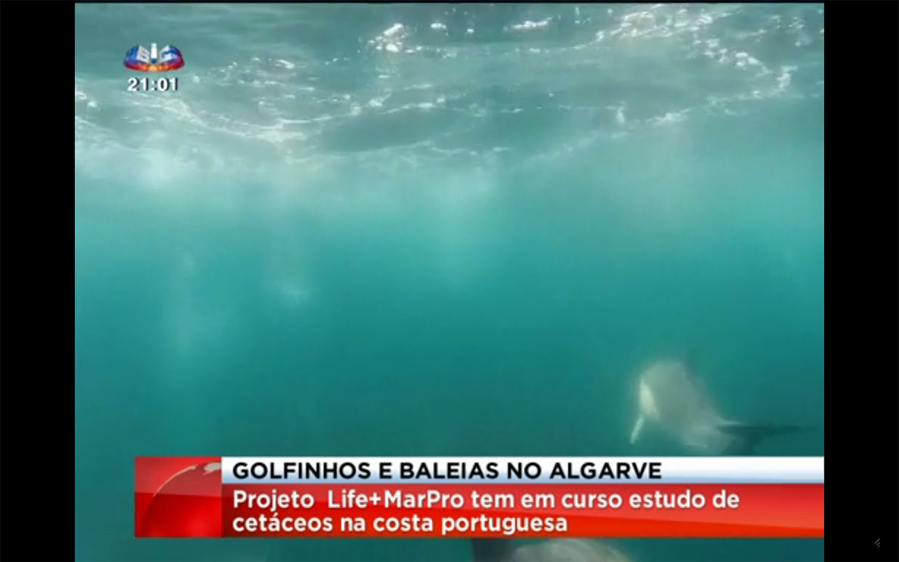 "The report ""Observation of Whales and Dolphins in the Algarve"" on national television"